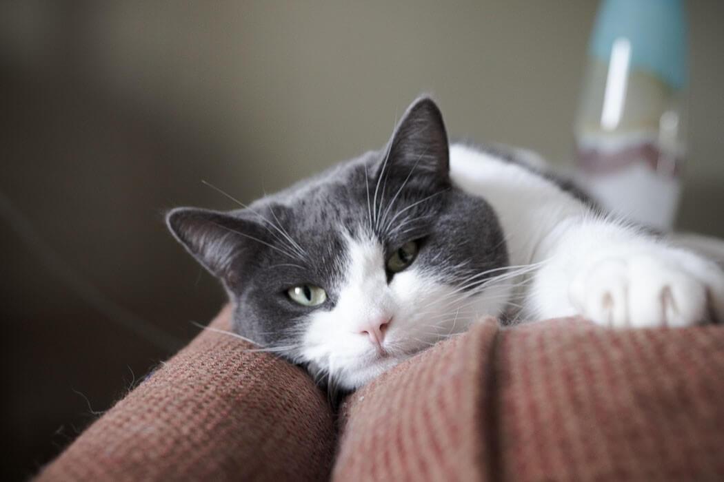 sleepy cat on an orange couch